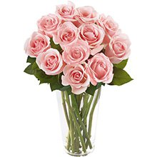 Brilhantes Rosas Cor-de-Rosa
