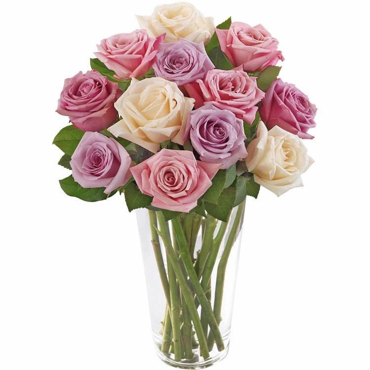 Brilhantes Rosas