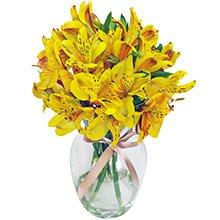 Admiração Amarela no Vaso