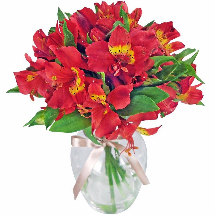 Admiração Vermelho no Vaso