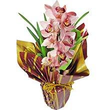 Maravilhosa Orquídea Rosa