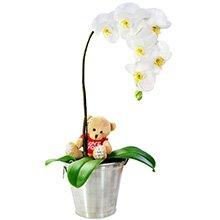 Orquídea com Amor