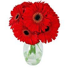 Lembrei de Você Vermelho no Vaso