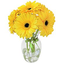 Lembrei de Você Amarelo no Vaso