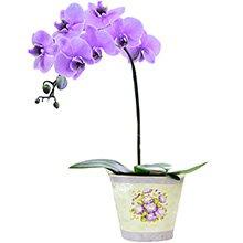 Orquídea Mystique