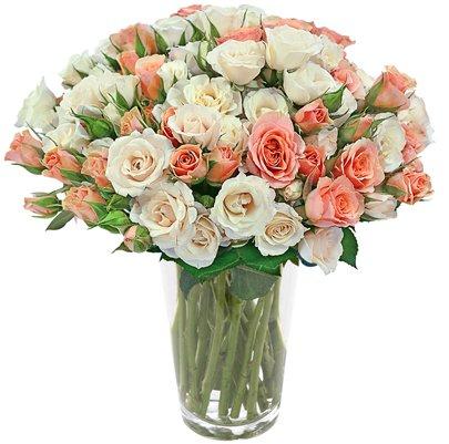 Primavera das Rosas Champanhe