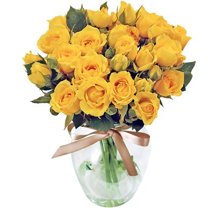 Contagiar de Rosas Amarelas no Vaso