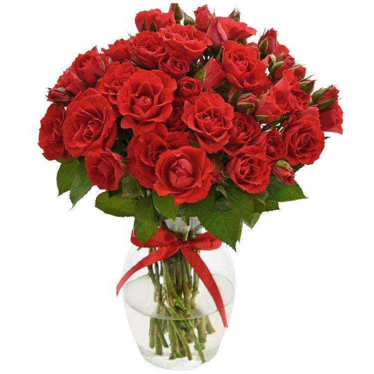 Contagiar de Rosas Vermelhas no Vaso
