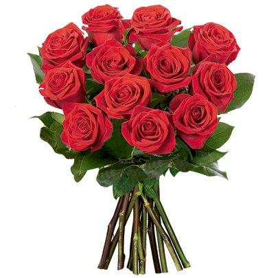 12 Lindas  Rosas Vermelhas