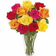 Brilhantes Rosas Coloridas (DF)