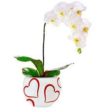 Passione da Orquídea Branca