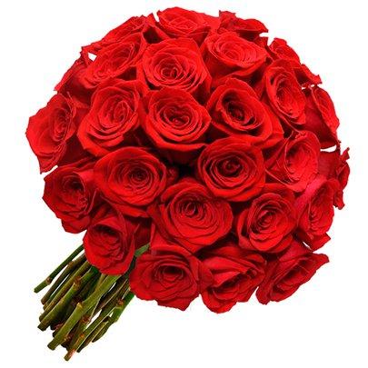 Espetáculo de 24 Rosas Vermelhas