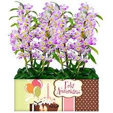 Feliz Aniversário com Orquídeas Dendobrium