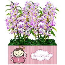Bem Vinda com Orquídeas Dendobrium