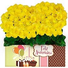 Feliz Aniversário com Begônias Amarelas