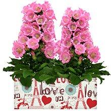 Romantique Campânulas Rosa