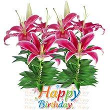Happy Birthday com Lírios Rosa