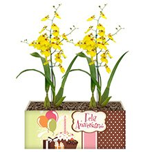 Feliz Aniversário com Orquídea Chuva de Ouro
