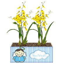 Bem Vindo com Orquídea Chuva de Ouro