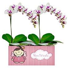 Bem Vinda com Orquídeas Mescladas