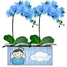Bem Vindo com Orquídeas Azuis
