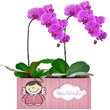 Bem Vinda com Orquídeas Pink