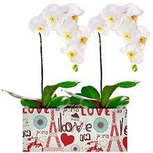 Romantique Orquídeas Brancas