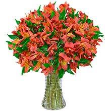 Luxuosas Astromélias Vermelhas no Vaso