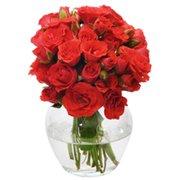 Brisa de Rosas Red