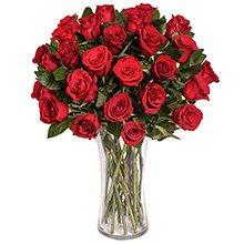 Exuberantes Rosas Vermelhas
