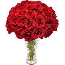 Opção do Amor Vermelho 40 Rosas