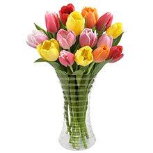 Luxuosas Tulipas Coloridas no Vaso
