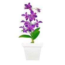 Deslumbrante Orquídea Denphale Lilás