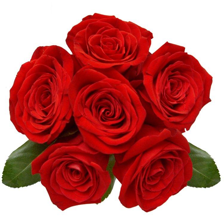 Buquê Luxuosas 6 Rosas Vermelhas