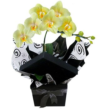 Glamurosas Orquideas Amarelas