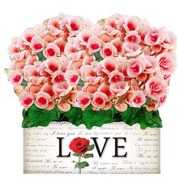 Dupla de Begônias Rose com Amor