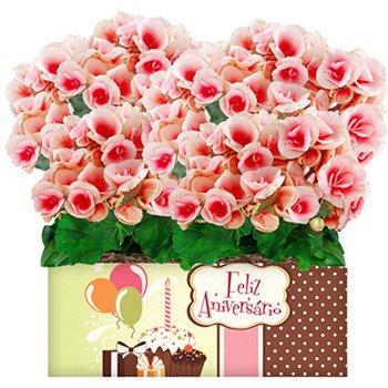 Dupla de Begônias Rose Feliz Aniversário