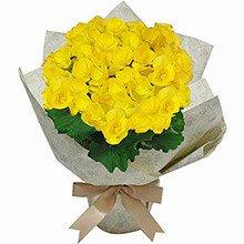 Begônia Amarela Para Dizer Que Te Adoro