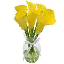 Callas Amarelas no Vaso