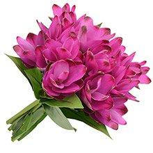 Buquê de Curcumas Purple