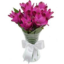 Delicadas Curcumas Purple no Vaso