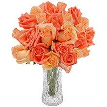 Opção do Amor Laranja 20 Rosas