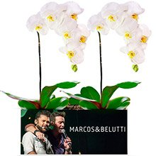 Campo de Orquídeas Brancas Encantadas