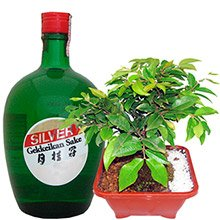Bonsai & Sake Ame Gekkeikan Silver