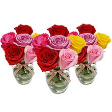 Trio Surpresa de Rosas Coloridas Colombianas