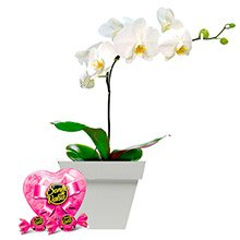 Orquídea Branca & Bombons