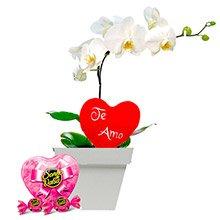 Orquídea Branca, Coração de Pelúcia e Bombons