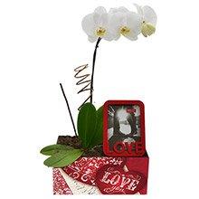 Magnífica Orquídea Love