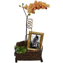 Orquídea Mesclada Encanto