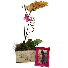 Delicada Orquídea Mesclada